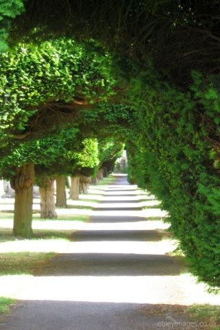 Avenue of yews, Painswick churchyard